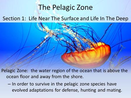 The Pelagic Zone Pelagic Zone: the water region of the ocean that is above the ocean floor and away from the shore. – In order to survive in the pelagic.