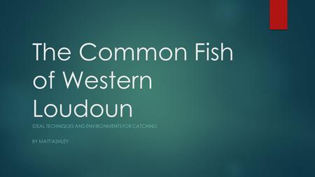 The Common Fish of Western Loudoun IDEAL TECHNIQUES AND ENVIRONMENTS FOR CATCHING BY MATT ASHLEY.