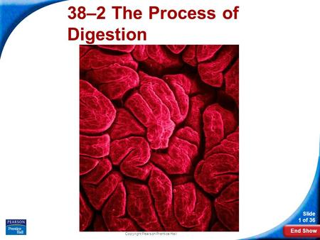 End Show Slide 1 of 36 Copyright Pearson Prentice Hall 38–2 The Process of Digestion.