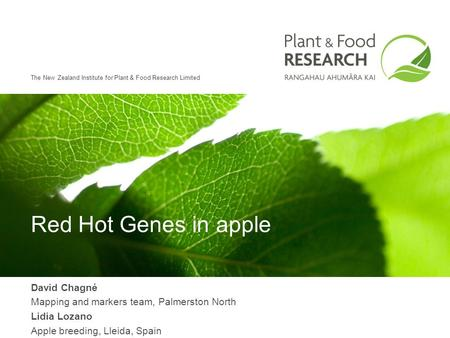 The New Zealand Institute for Plant & Food Research Limited Red Hot Genes in apple David Chagné Mapping and markers team, Palmerston North Lidia Lozano.