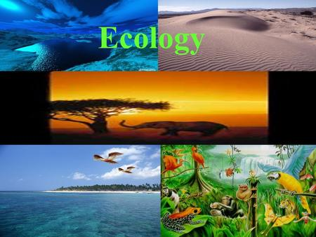 Ecology. What is Ecology? Eco means environment Logy means the study of So, ecology is the study of environment What is an environment made of? Living.