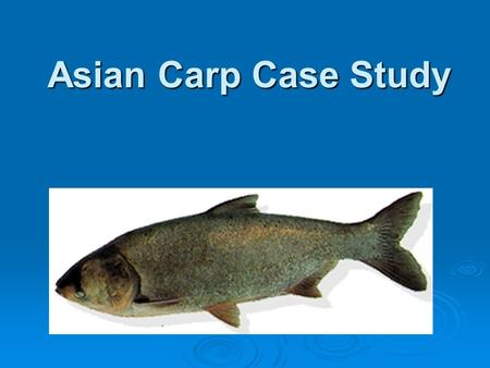 Asian Carp Case Study. The Asian Carp - An Exotic Species  Exotic species are living things that find a new home in a place where they did not exist.