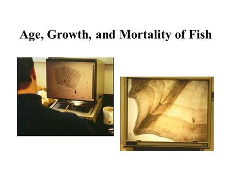 Age, Growth, and Mortality of Fish. Age and growth studies can be used to determine – maturity – age-related growth rates – survival/mortality rates,
