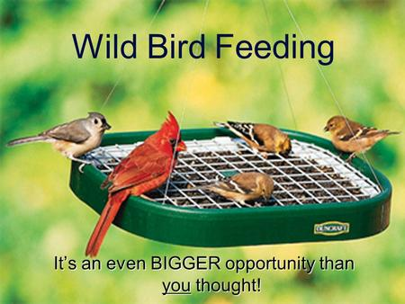 Wild Bird Feeding It's an even BIGGER opportunity than you thought!