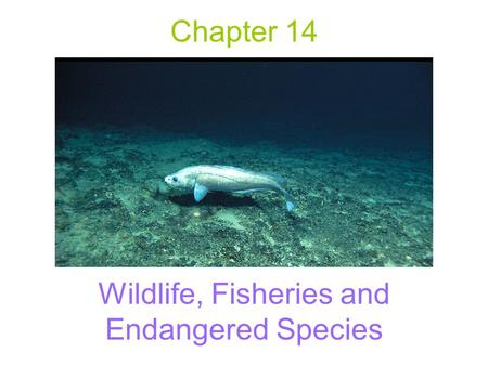 Chapter 14 Wildlife, Fisheries and Endangered Species.