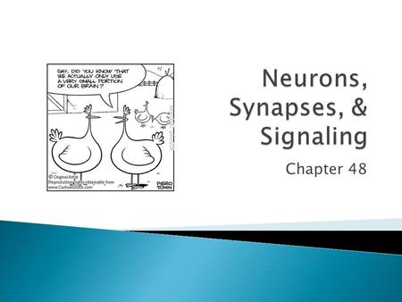 Chapter 48.  Short distance communication ◦ Synapses between cells  Neurotransmitters.
