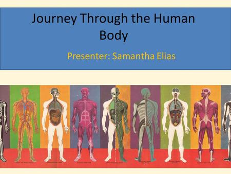 Journey Through the Human Body
