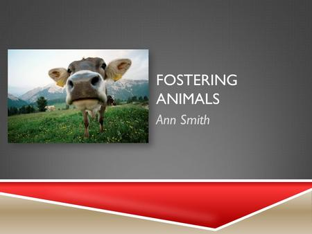 FOSTERING ANIMALS Ann Smith. PRODUCT AND STEPS TO BEGIN  Find a facilitator with a background with Veterinary Sciences.  Volunteer with an Animal Rescue.