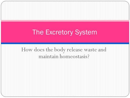 How does the body release waste and maintain homeostasis? The Excretory System.