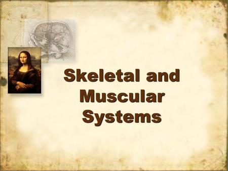 Skeletal and Muscular Systems Vocabulary Cell – basic unit of structure and function of living things Locomotion – movement Organ – a group of tissues.