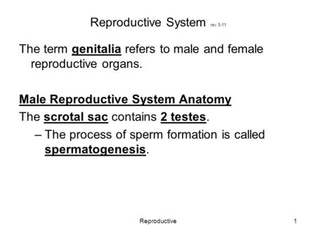 Reproductive1 Reproductive System rev 5-11 The term genitalia refers to male and female reproductive organs. Male Reproductive System Anatomy The scrotal.
