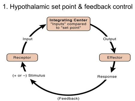 1. Hypothalamic set point & feedback control. 2. Negative feedback in thermoregulation.