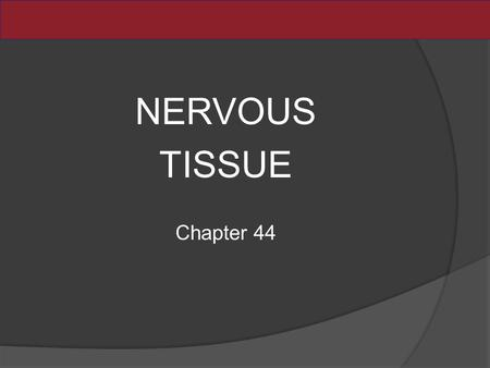 NERVOUS TISSUE Chapter 44. What Cells Are Unique to the Nervous System? Nervous systems have two categories of cells: Neurons generate and propagate electrical.