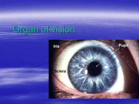 Organ of vision. The Five Senses  Touch  Hearing  SIGHT  Taste  Smell.