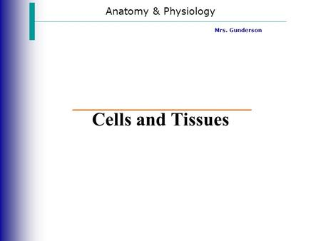 Anatomy & Physiology Mrs. Gunderson Cells and Tissues.