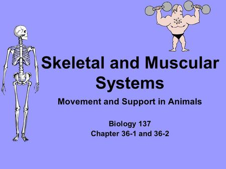 Skeletal and Muscular Systems Movement and Support in Animals Biology 137 Chapter 36-1 and 36-2.