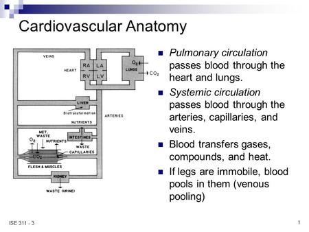 1 ISE 311 - 3 Cardiovascular Anatomy Pulmonary circulation passes blood through the heart and lungs. Systemic circulation passes blood through the arteries,