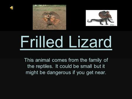 Frilled Lizard This animal comes from the family of the reptiles. It could be small but it might be dangerous if you get near.