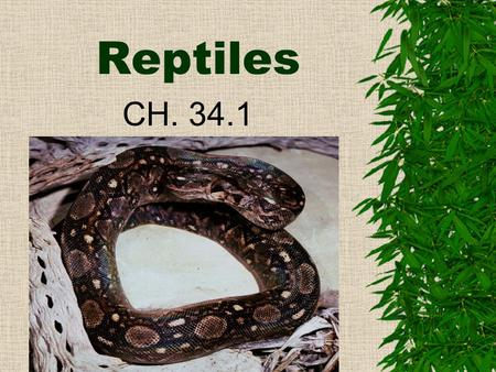 "Reptiles CH. 34.1 I. Characteristics  A. Reptile means ""one who crawls."" –The study of reptiles is called Herpetology.  B. They were the first vertebrates."