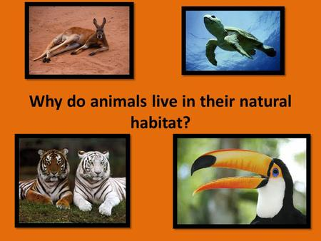Why do animals live in their natural habitat?. Why do animals live in their natural habitats? Animals live in their habitat because it is the best environment.