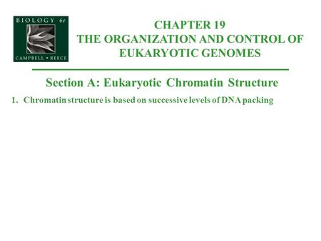 Section A: Eukaryotic Chromatin Structure 1.Chromatin structure is based on successive levels of DNA packing CHAPTER 19 THE ORGANIZATION AND CONTROL OF.