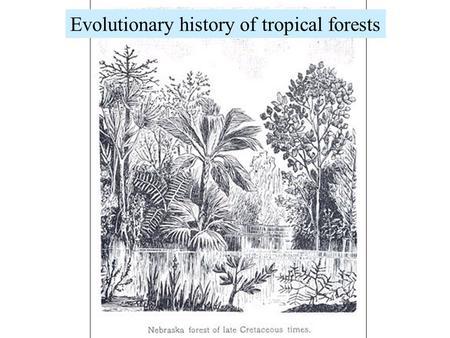 Evolutionary history of tropical forests. Geologic eras: a revision...