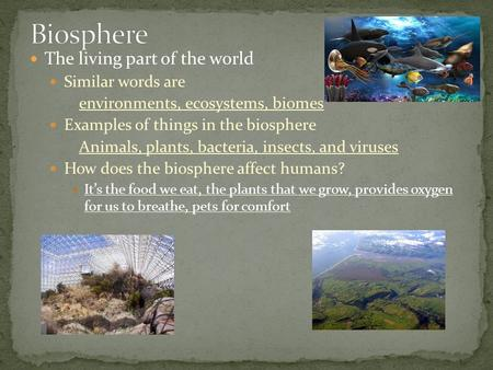 The living part of the world Similar words are environments, ecosystems, biomes Examples of things in the biosphere Animals, plants, bacteria, insects,