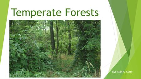 Temperate Forests By: Isiah A. Curry. Location Geography  Found between 30 degrees and 55 degrees latitude  Majority is found between 40 degrees and.