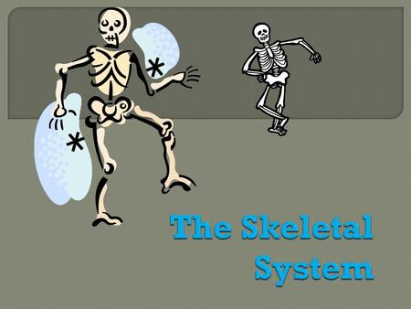  The appendicular skeleton is made up of the bones of the limbs and their supporting elements (girdles) that connect them to the trunk  126 bones 