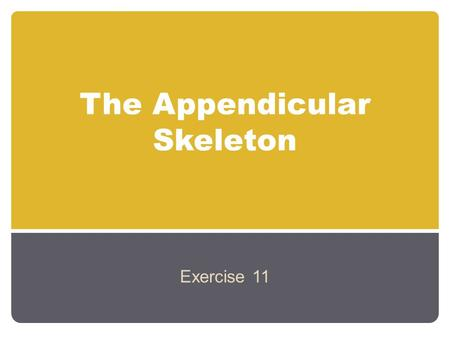 The Appendicular Skeleton Exercise 11. An Introduction to the Appendicular Skeleton The Appendicular Skeleton 126 bones Allows us to move and manipulate.