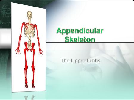The Upper Limbs. Shoulder Girdle (aka Pectoral Girdle) contains two bones: clavicle and scapula Clavicle makes up the collarbone –Attaches to manubrium.