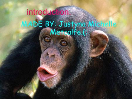 Introduction. MADE BY: Justyna Michelle Metcalfe.(: