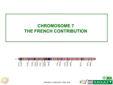 FINISHING WORKSHOP APRIL 2008 CHROMOSOME 7 THE FRENCH CONTRIBUTION TG216 TG438 T1112 T1355 T1328 T1428 T1962 T1414 T1497 T0676 TM18 CT54 T0966 T0731 TM15.