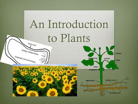 An Introduction to Plants General Characteristics of Plants  Hold up the correct number using your fingers that corresponds with the correct answer.