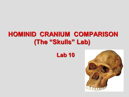"HOMINID CRANIUM COMPARISON (The ""Skulls"" Lab) Lab 10."