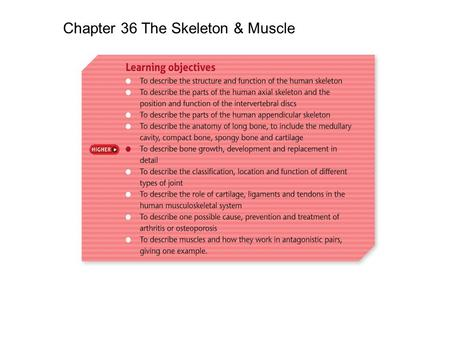 Chapter 36 The Skeleton & Muscle. Support – Bones of the skeleton provide a rigid frame that holds the body upright. Protection – The skull protects the.