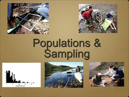 Populations & Sampling. Population The number of species living in a particular place and a particular time Population ecology looks at knowing the dynamics.