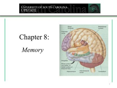 Chapter 8: Memory 1 Memory - any indication that learning persists over time Involves ability to store and retrieve information Sensory memory - initial.