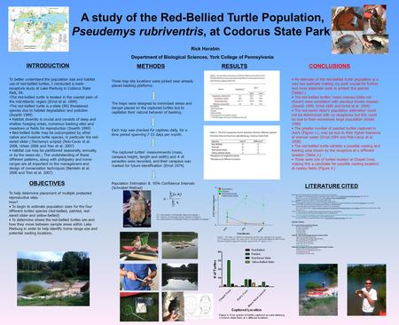 A study of the Red-Bellied Turtle Population, Pseudemys rubriventris, at Codorus State Park Rick Harabin Department of Biological Sciences, York College.