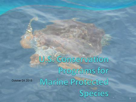 1 October 24, 2015. 2 Endangered Species Act Marine Mammal Protection Act Key Legal Mandates for Protected Species.