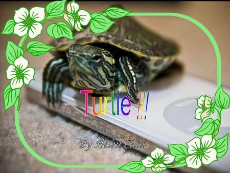 Appearance P.1 Turtles life cycle P.2 What do they eat P.3 Turtles' species P.4 Turtles' enemies P.5 Some special things about turtles P.6 My feelings.
