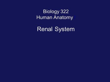 Biology 322 Human Anatomy I Renal System. Organs of Renal System.
