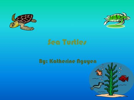 Sea Turtles By: Katherine Nguyen. Sea Turtles * Sea turtles are amazing!! *They can do things we can't do. *Sea turtles have strong bodies.