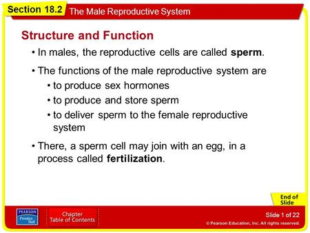 Section 18.2 The Male Reproductive System Slide 1 of 22 Structure and Function In males, the reproductive cells are called sperm. The functions of the.