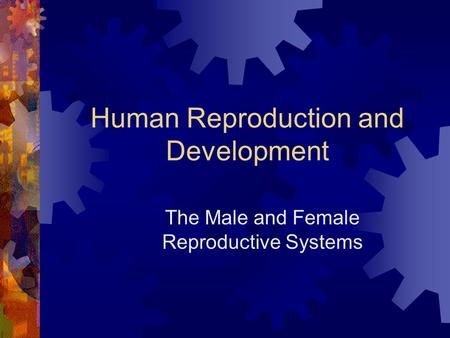 Human Reproduction and Development The Male and Female Reproductive Systems.