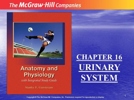 1 Copyright © The McGraw-Hill Companies, Inc. Permission required for reproduction or display. CHAPTER 16 URINARY SYSTEM.
