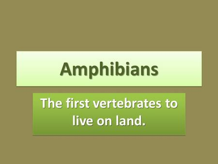 AmphibiansAmphibians The first vertebrates to live on land.