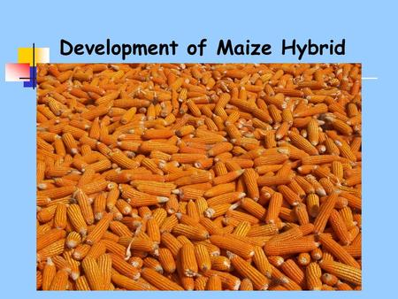 Development of Maize Hybrid