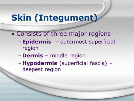 Skin (Integument) Consists of three major regions –Epidermis – outermost superficial region –Dermis – middle region –Hypodermis (superficial fascia) –