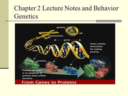 Chapter 2 Lecture Notes <strong>and</strong> Behavior Genetics. Meiosis Meiosis: This is division of the germ cells (i.e., the male or female reproductive cells) The result.
